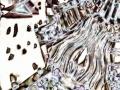 Michael_Schaffer_landscape56